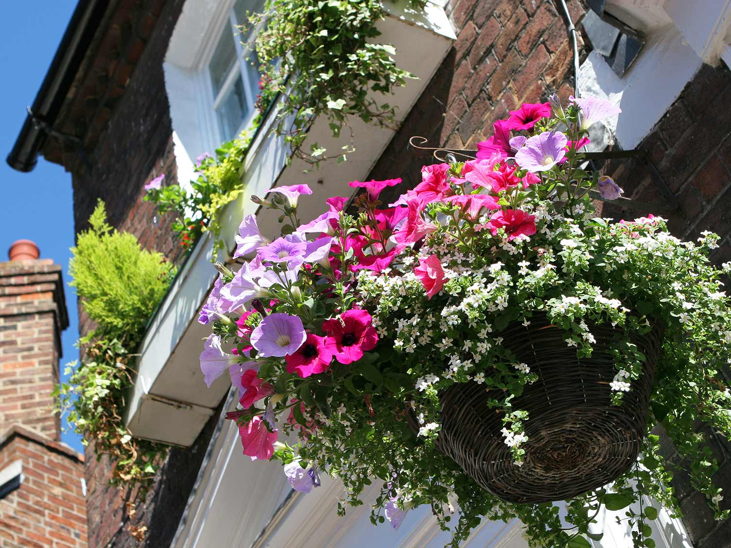 A Beginners Guide To Hanging Baskets Lovethegarden