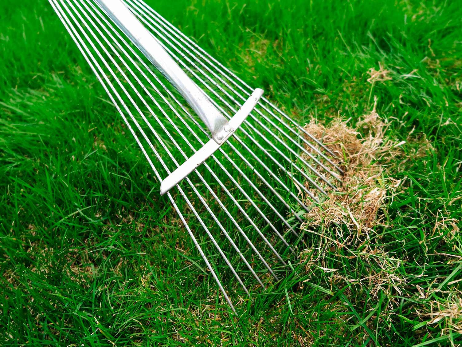 7 lawn care tips | lovethegarden