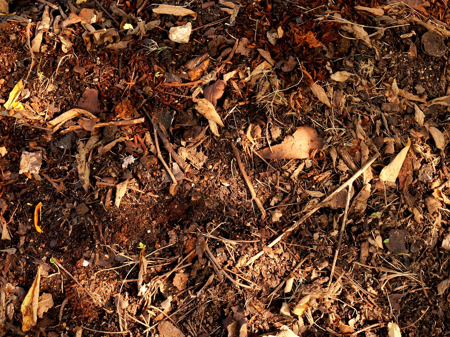 Composted leafmould