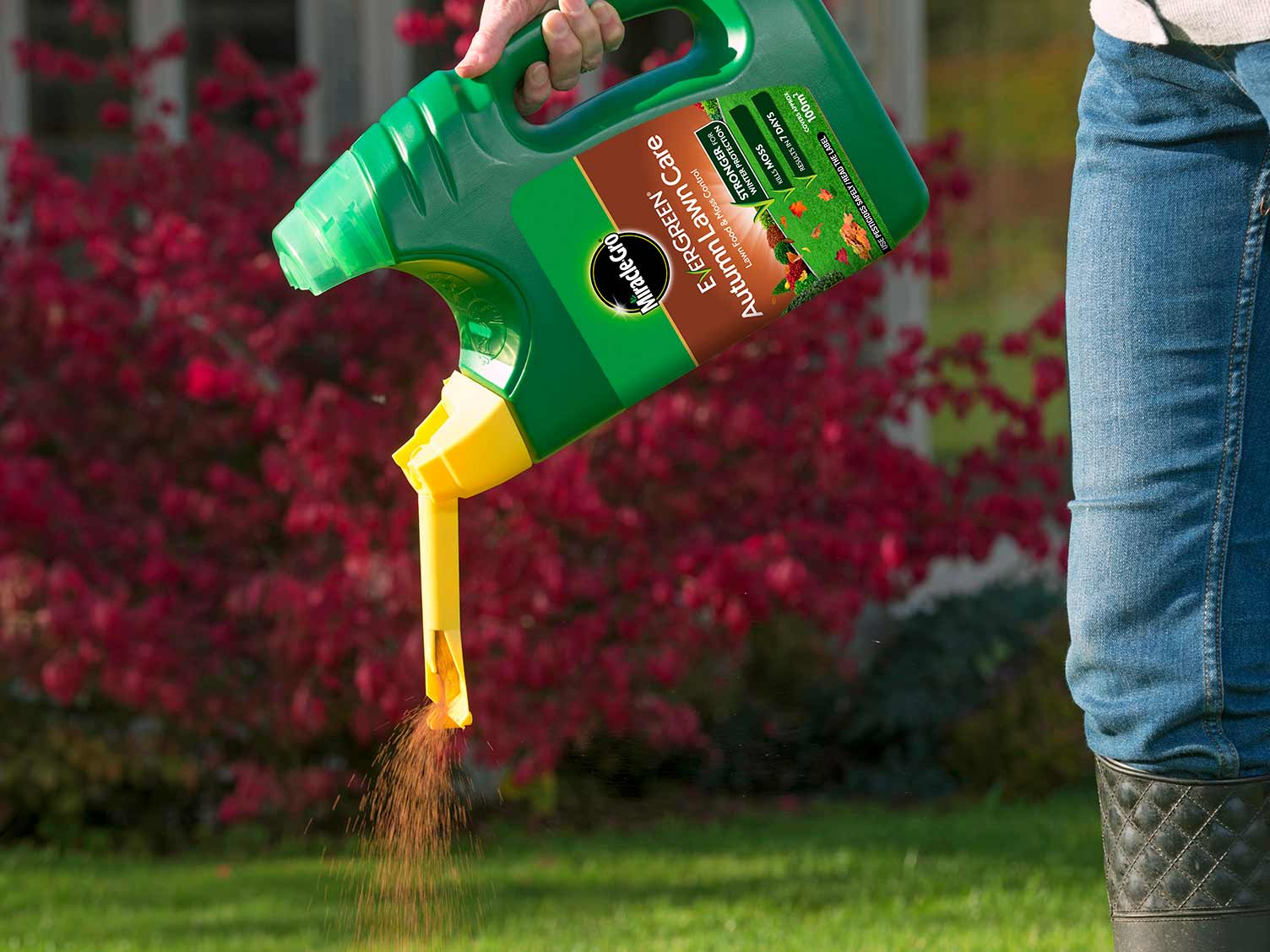 Miracle-Gro EverGreen Autumn Lawn Care spreader in use