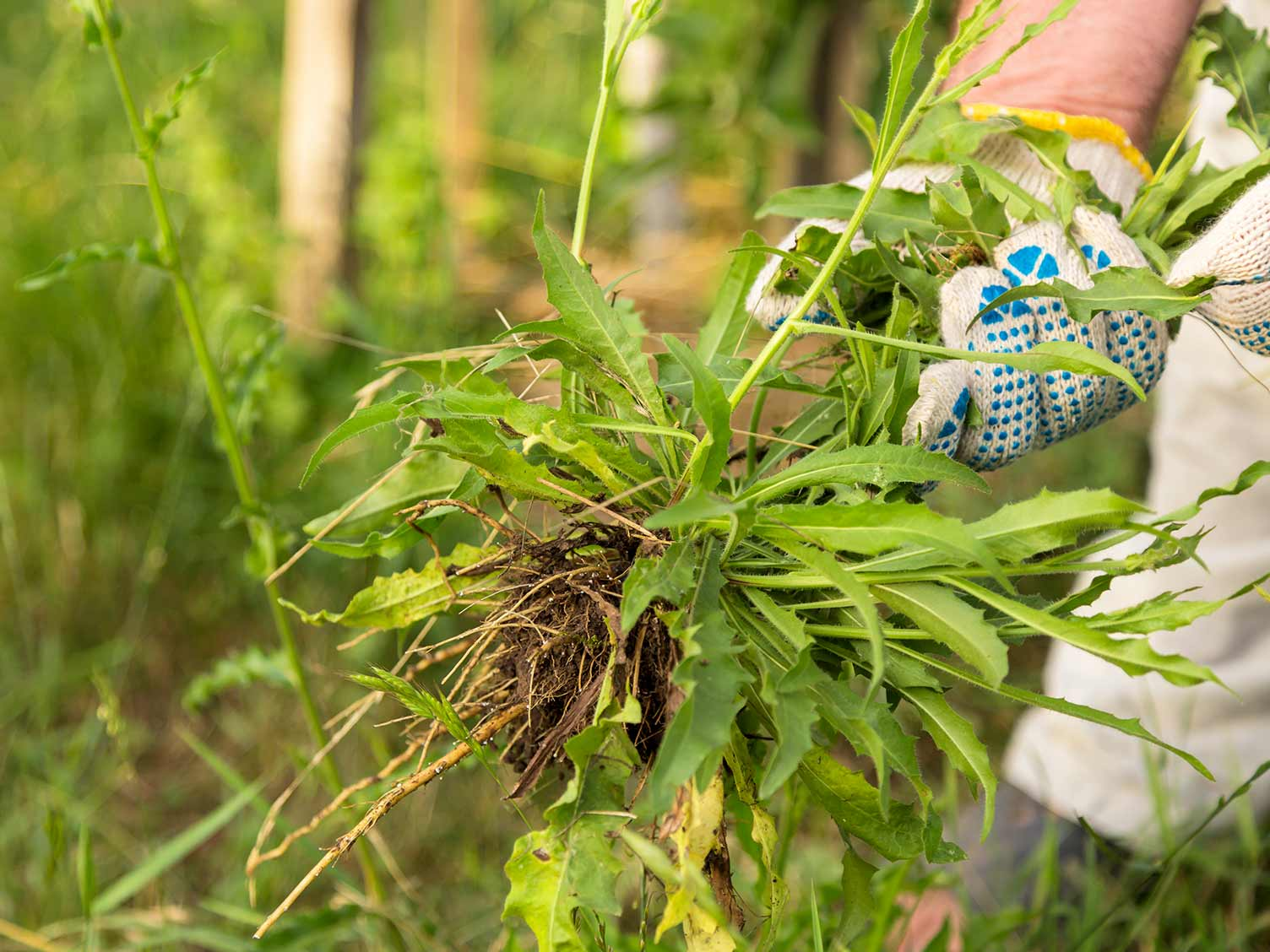 https://www.lovethegarden.com/sites/default/files/content/articles/UK_pulling-up-weeds-by-hand.jpg