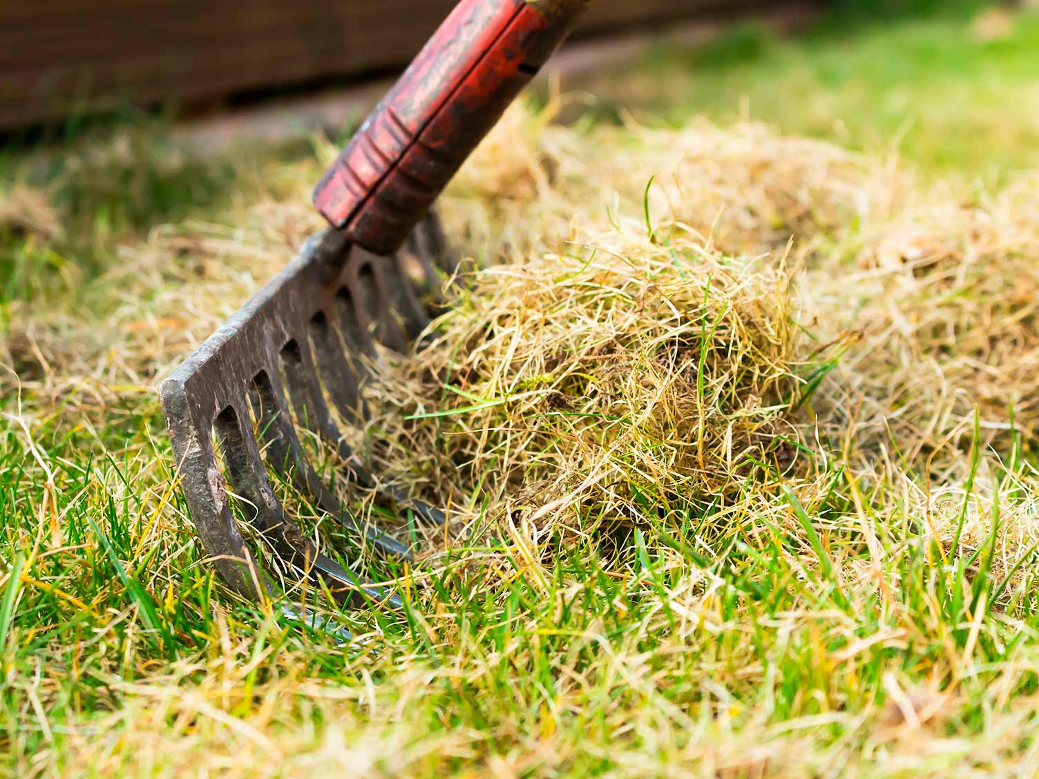 What a lawn scarifier is and how to use It   lovethegarden