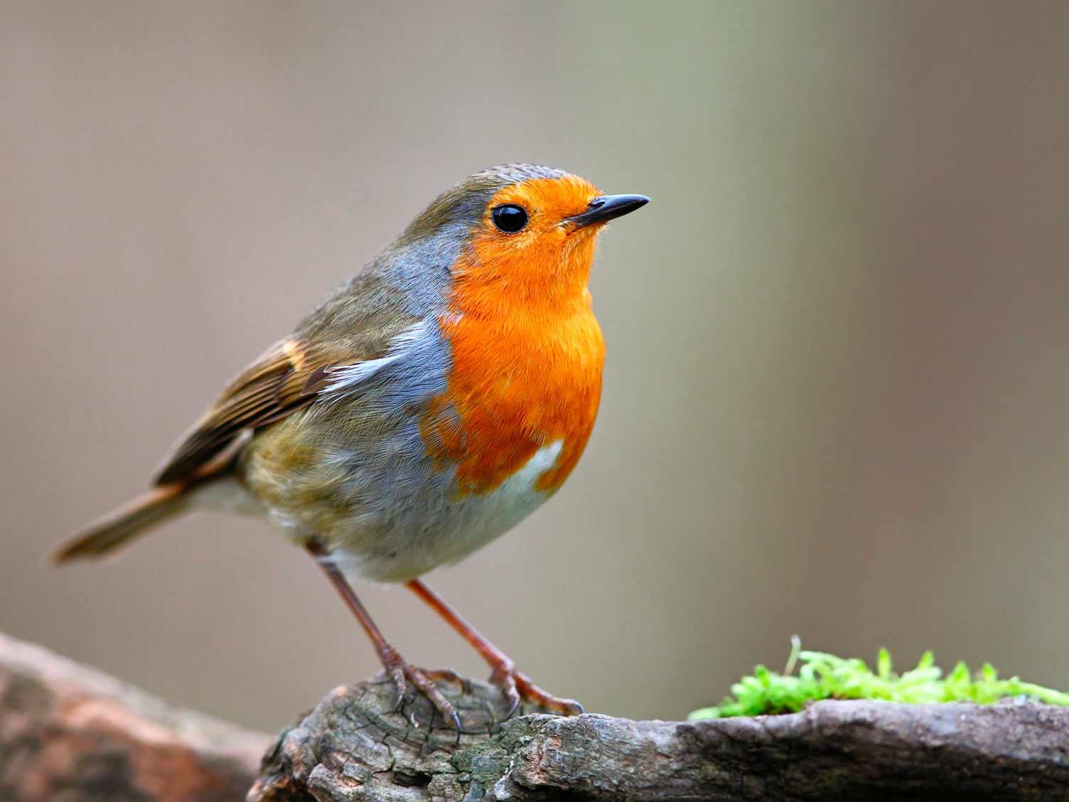 19 common British birds in your garden | lovethegarden