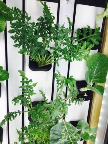 R aliser un jardin potager vertical comment le cr er la - Comment faire un jardin vertical ...