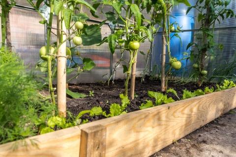Comment utiliser une serre de jardin toute l\'année ? : Mon jardin ...