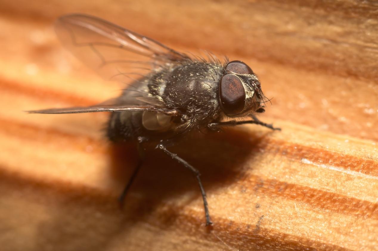 Comment Se Débarrasser Des Petite Mouche se débarrasser des mouches | la pause jardin