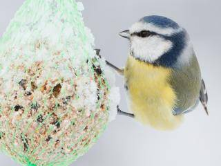 What to feed birds in winter
