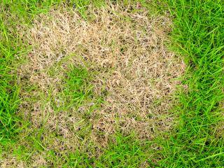 Tackling common lawn problems