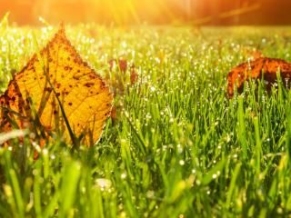 Autumn lawn care guide