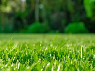 A complete guide to lawn and grass feeding