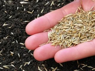 How to sow grass seed for the perfect lawn