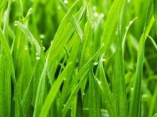 Tips to kick start your lawn