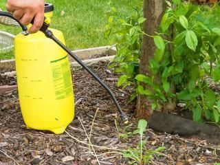 Weedkiller usage, storage and safe disposal
