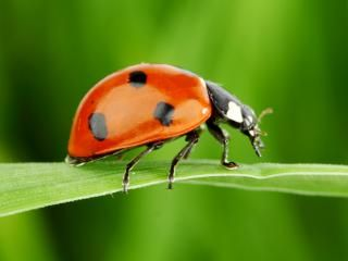11 fascinating ladybird facts