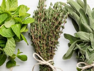 15 herb myths debunked