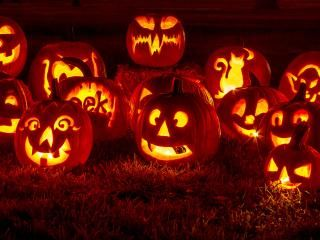 Crazy facts about halloween pumpkins
