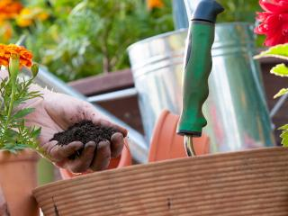 Add value to your house - sort out your garden