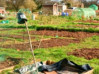 Allotment gardening: take up the challenge!