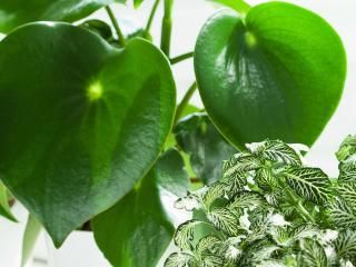 Indoor gardening: bringing nature into your home