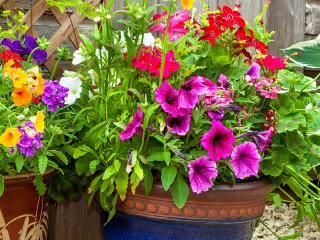 Garden planters and potting plants
