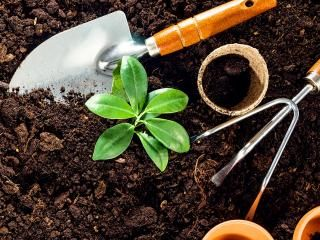 Mr Plant Geek's Garden Hacks: soil