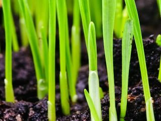 Best time to sow grass seed