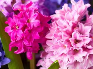 Top 10 most popular spring bulbs