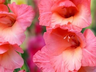How To Grow And Care For Hibiscus Lovethegarden