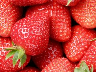 Strawberries (Fragaria x ananassa)