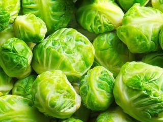 Brussels Sprouts (Brassica oleracea)