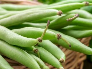 French Beans (Phaseolus Vulgaris)