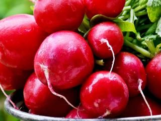Radishes (Raphanus sativus)