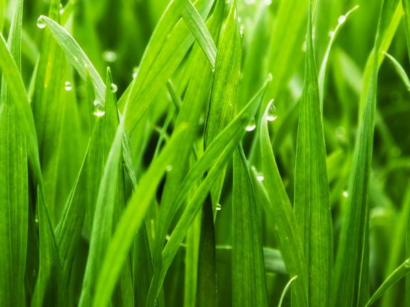 Build a great lawn: a seasonal plan