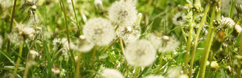 Wenn Der Rasen Bluht Liebe Deinen Garten
