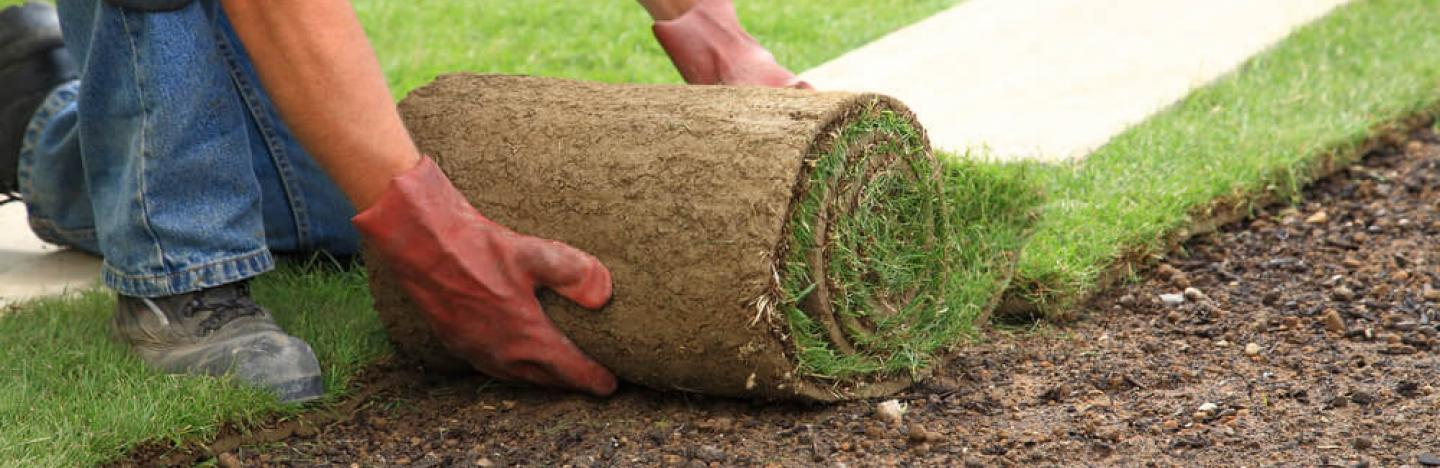 How to lay the perfect lawn turf