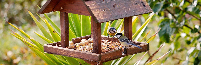Biodiversité pour un jardin équilibré, jardinage bio | La Pause Jardin