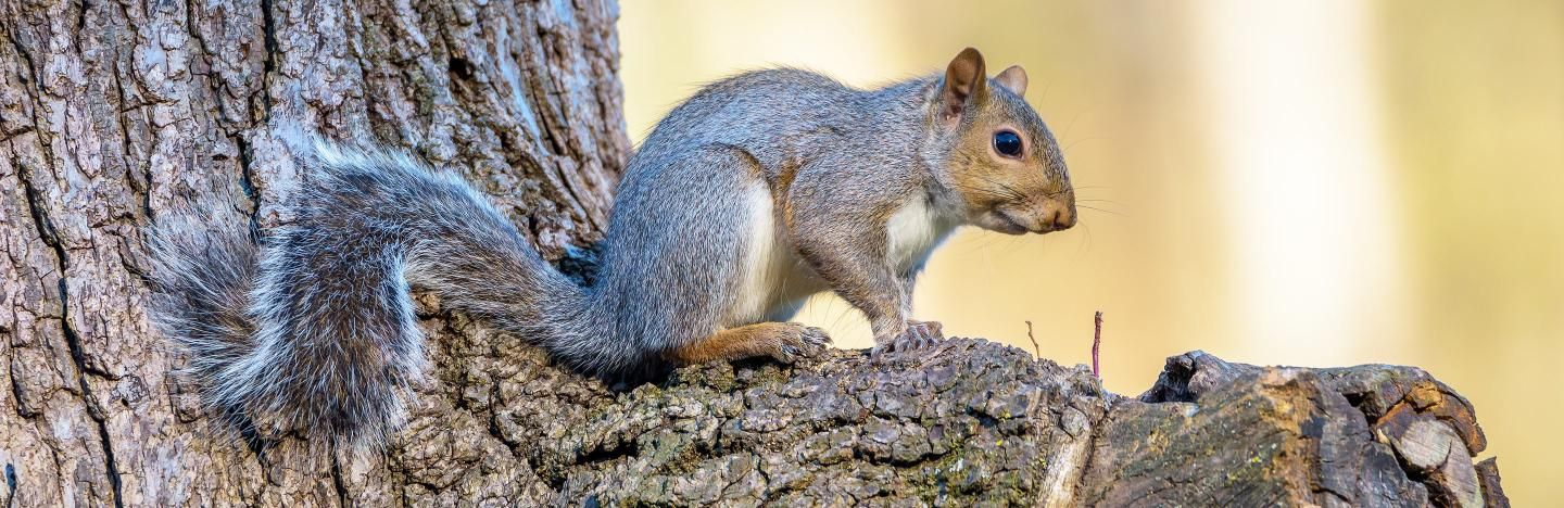 A Guide To What Squirrels Eat
