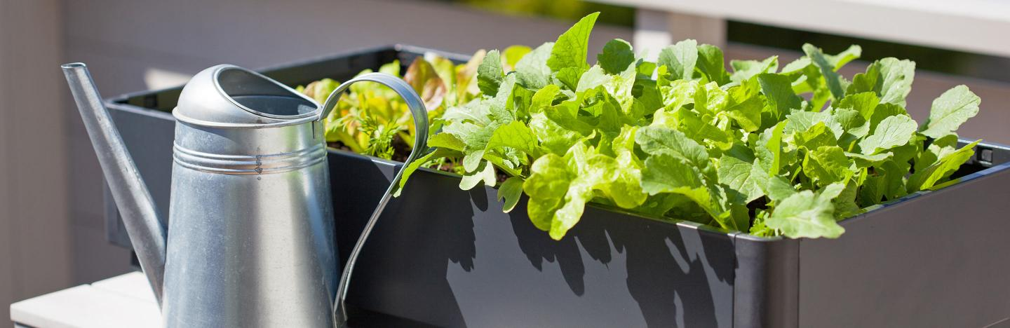 Growing fruit and veg in containers