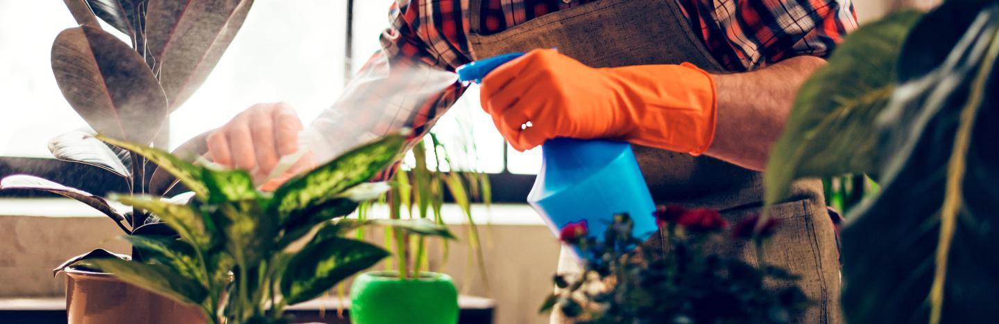 How to feed and water houseplants