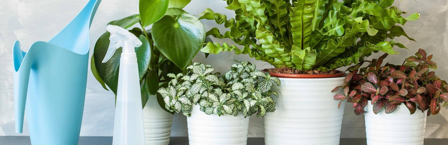 How to make your houseplants happy