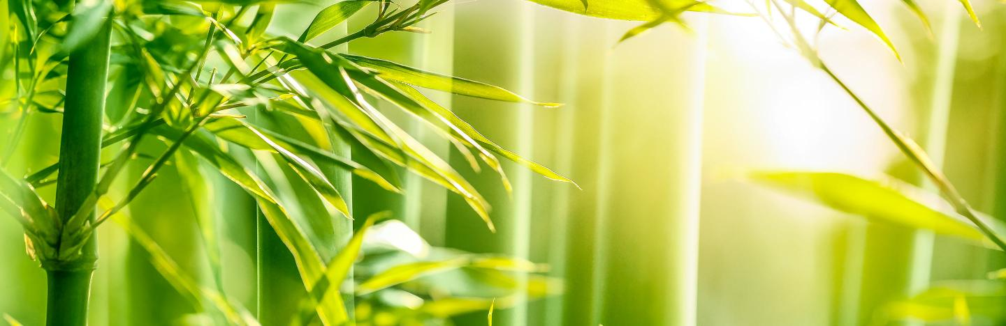 A Guide To Growing Bamboo Love The Garden