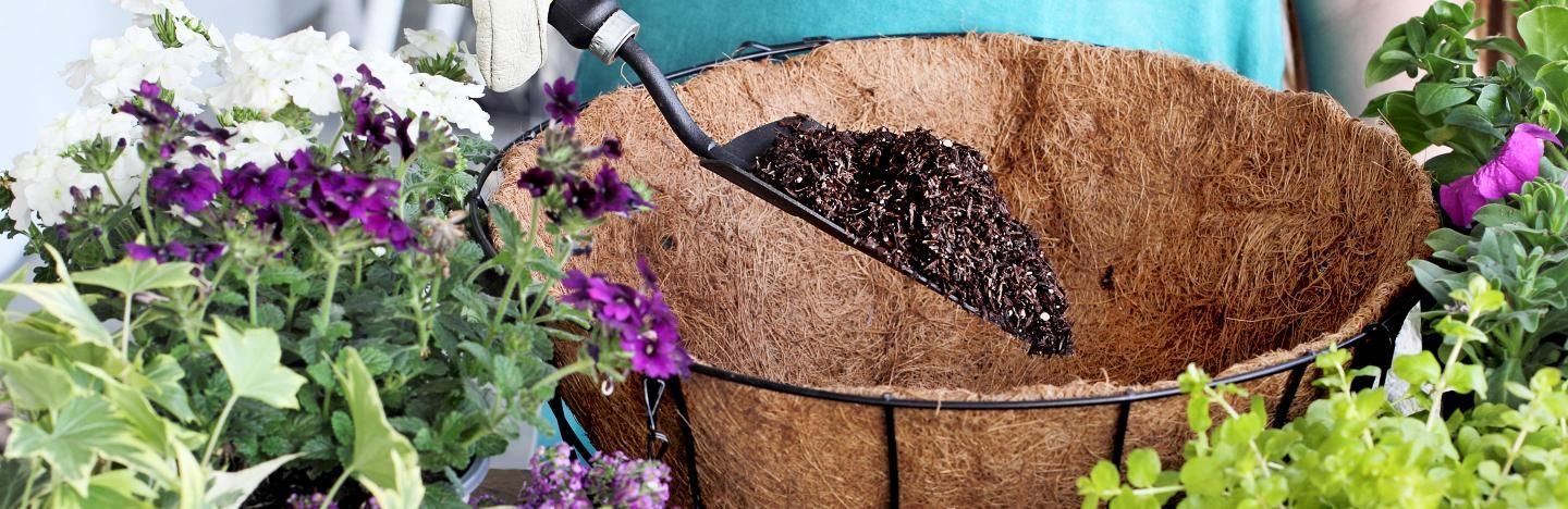 A beginners guide to hanging baskets