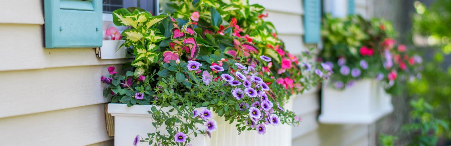A guide to using pots, tubs and window boxes