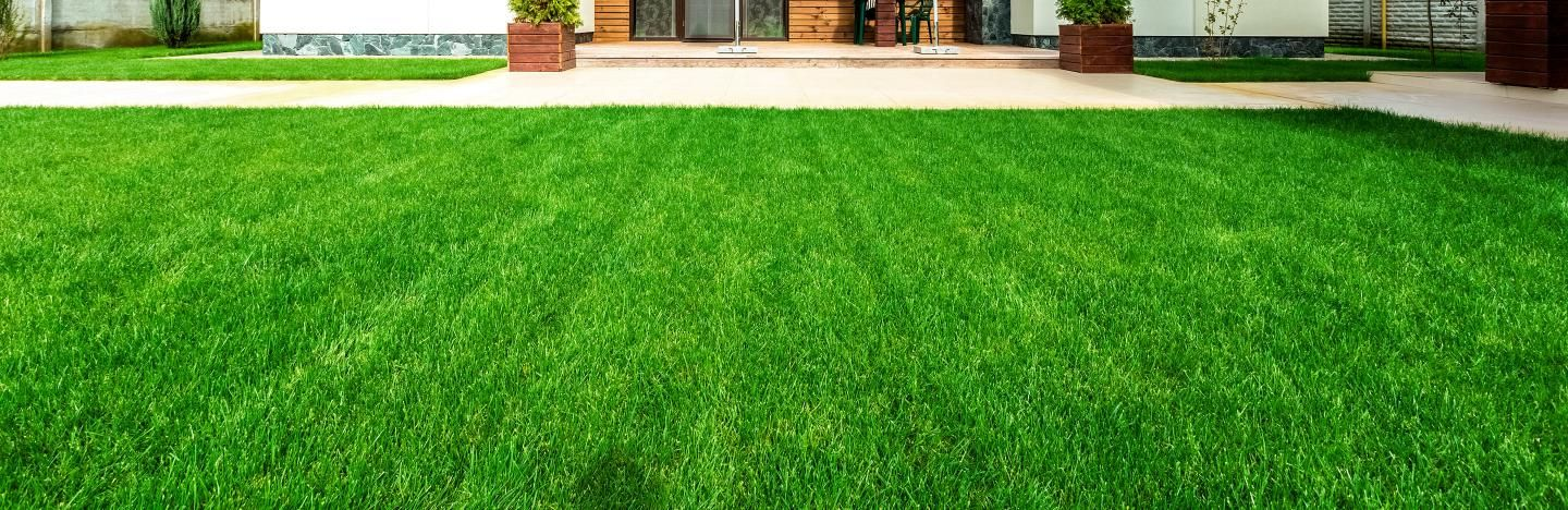 Top dressing a lawn: how and why