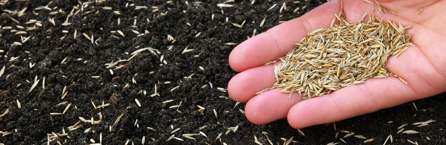 How To Sow Gr Seed For The Perfect Lawn Lovethegarden