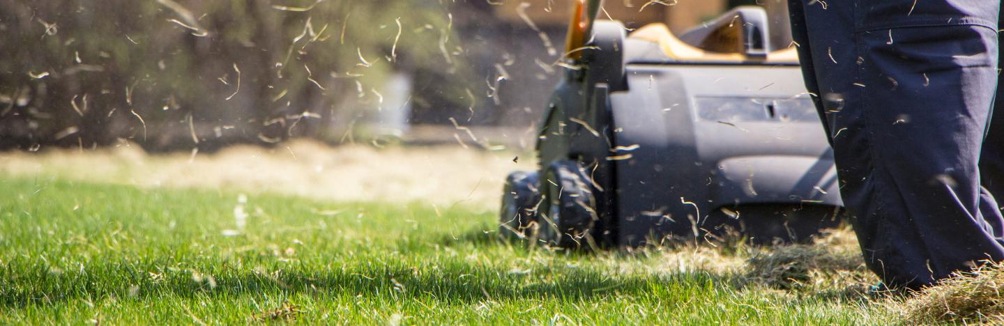 What a lawn scarifier is and how to use it