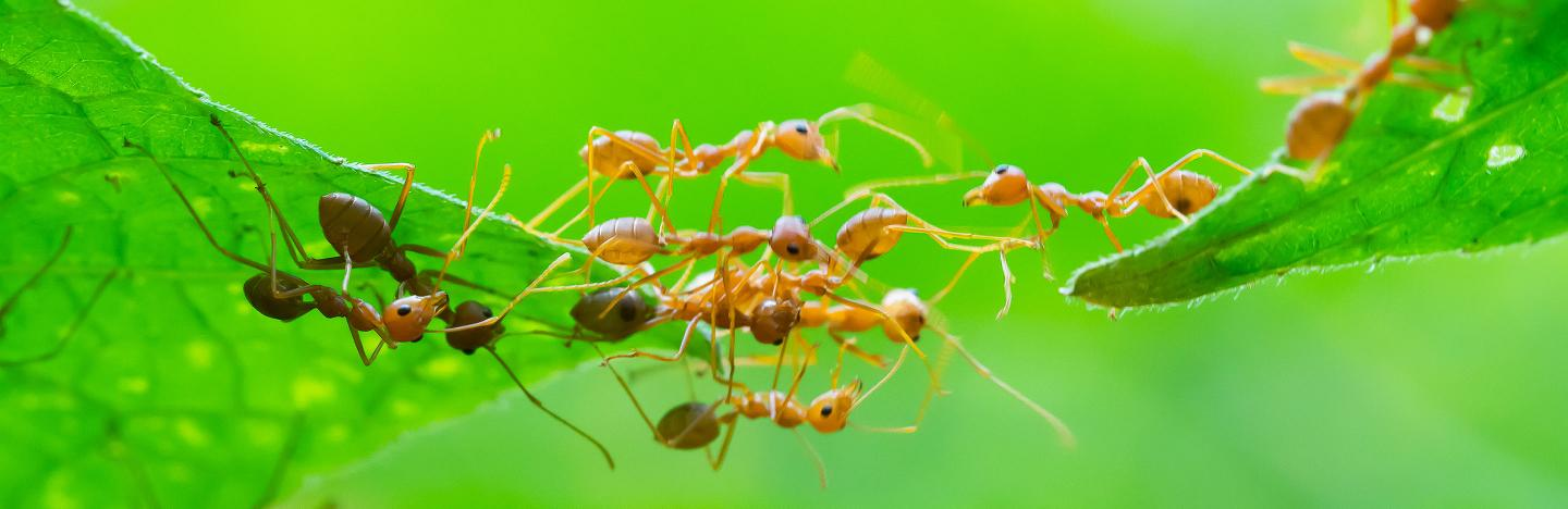 Ants Treatment And Control Lovethegarden