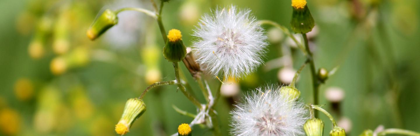 Identifying And Controlling Common Lawn Weeds Lovethegarden