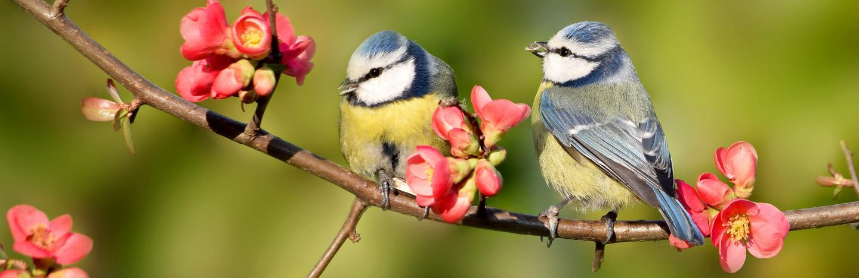 19 Common British Birds In Your Garden Lovethegarden