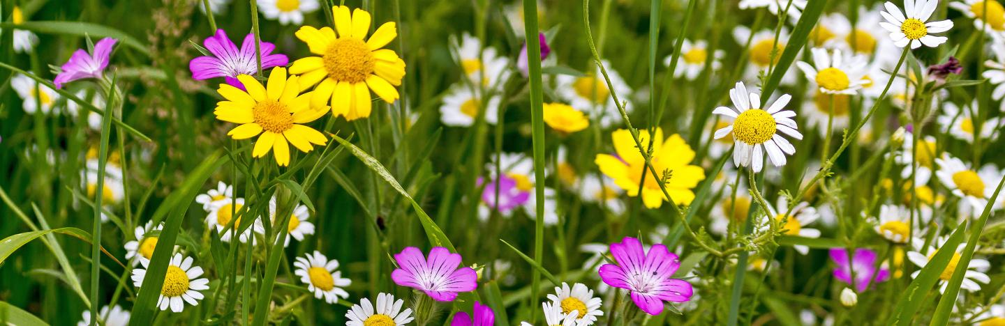 Go wild with British wildflowers